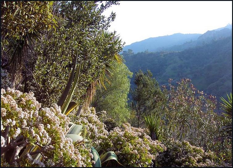 amirs garden since 1971 - Amirs Garden